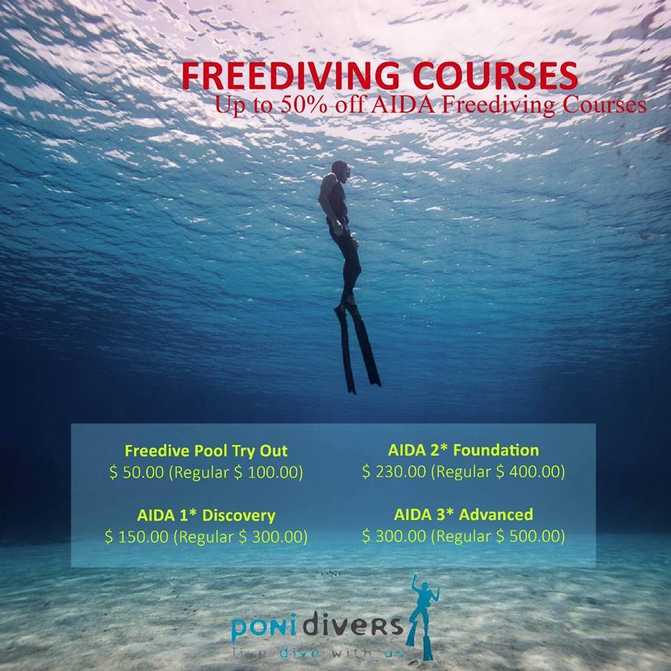 AIDA Poni Divers.jpg